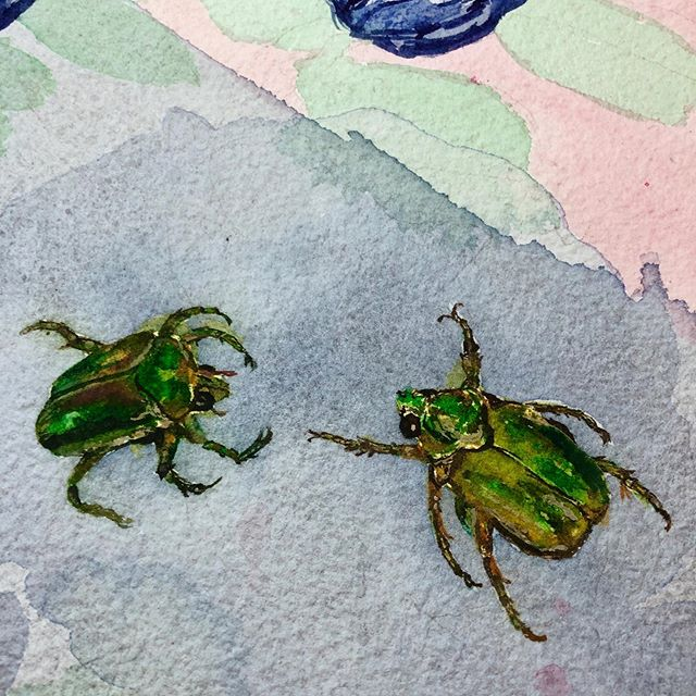 I am not very happy with most of my current painting in progress. It's bigger than my norm; I'm experimenting; I'm outside of my comfort zone. But I do like this (unfinished) part with a pair of June bugs (for now). ⠀⠀⠀⠀⠀⠀⠀⠀⠀⠀ What do you do when you aren't happy with a painting? How do you decide when it's time to silence the critic and keep going vs when it's time for a clean slate do-over? ⠀⠀⠀⠀⠀⠀⠀⠀⠀ #LimnColors #HandmadeWatercolor #WIP #PaintingInProgress #RealityCheck #PaintingProcess #CreativeDilemma #WatercolorPainting #JuneBug