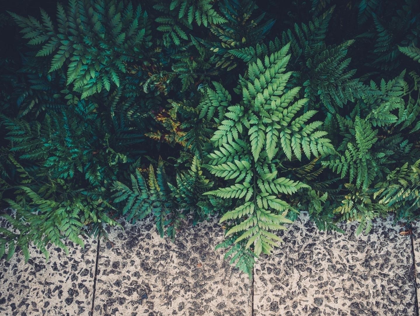fernssidewalk.jpg