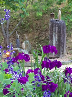 Purple Iris_stone cairns.jpg
