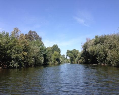 LA River_Sepulveda Basin.jpg