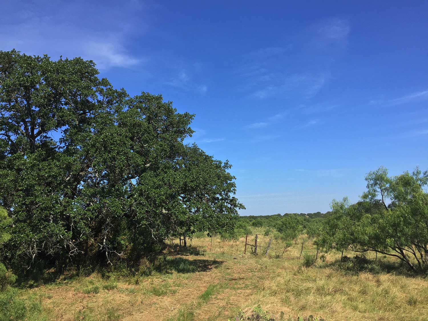 Fredericksburg-Realty-Hill-Country-Real-Estate-Farm-and-ranch-land.jpg