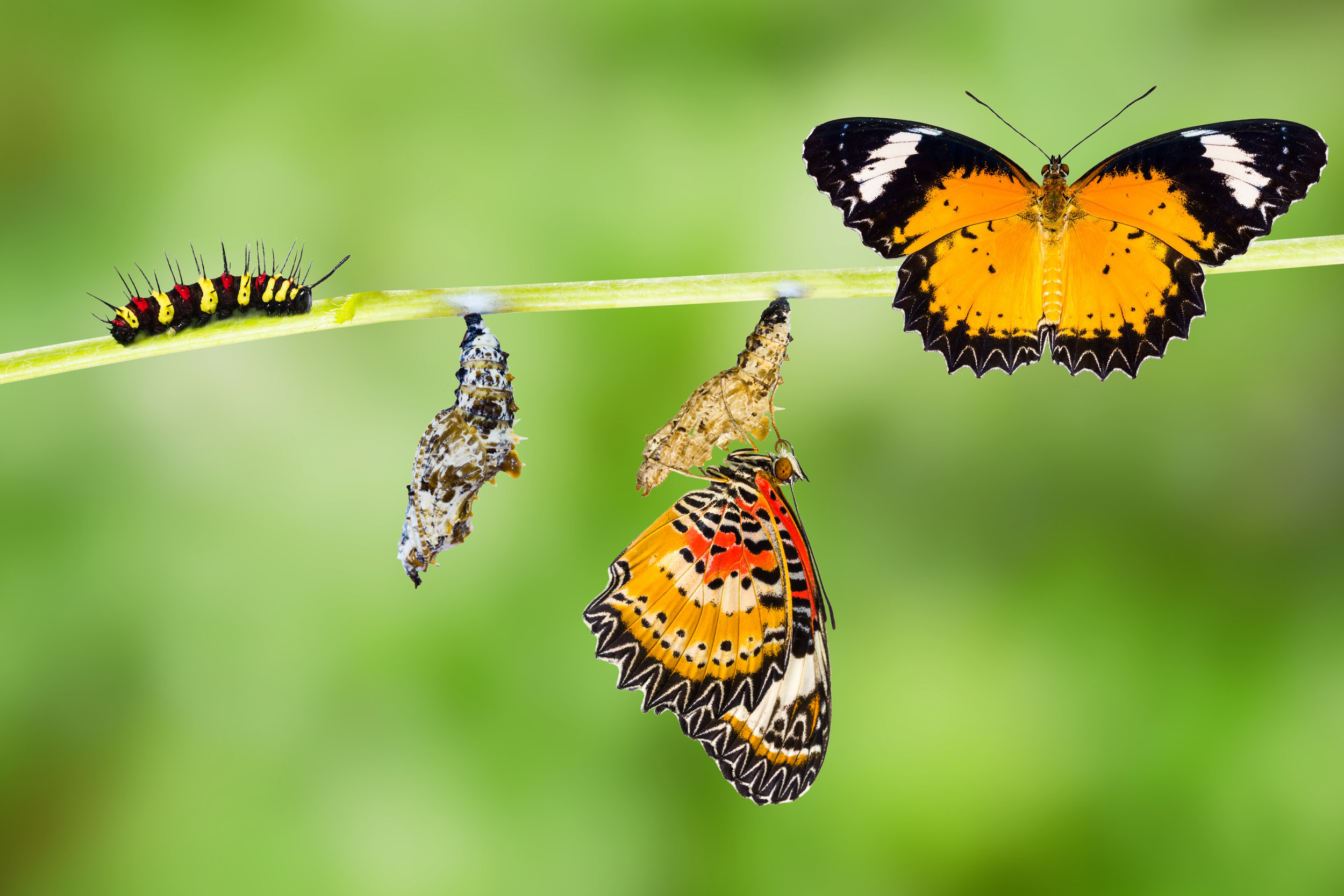 He believes that going through a death with him we will emerge as beautiful butterflies so that others will be drawn to the same life. -