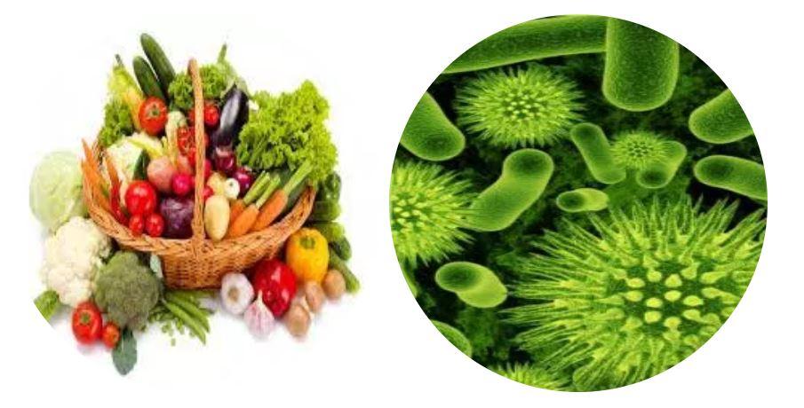 microorganismes et legumes.JPG