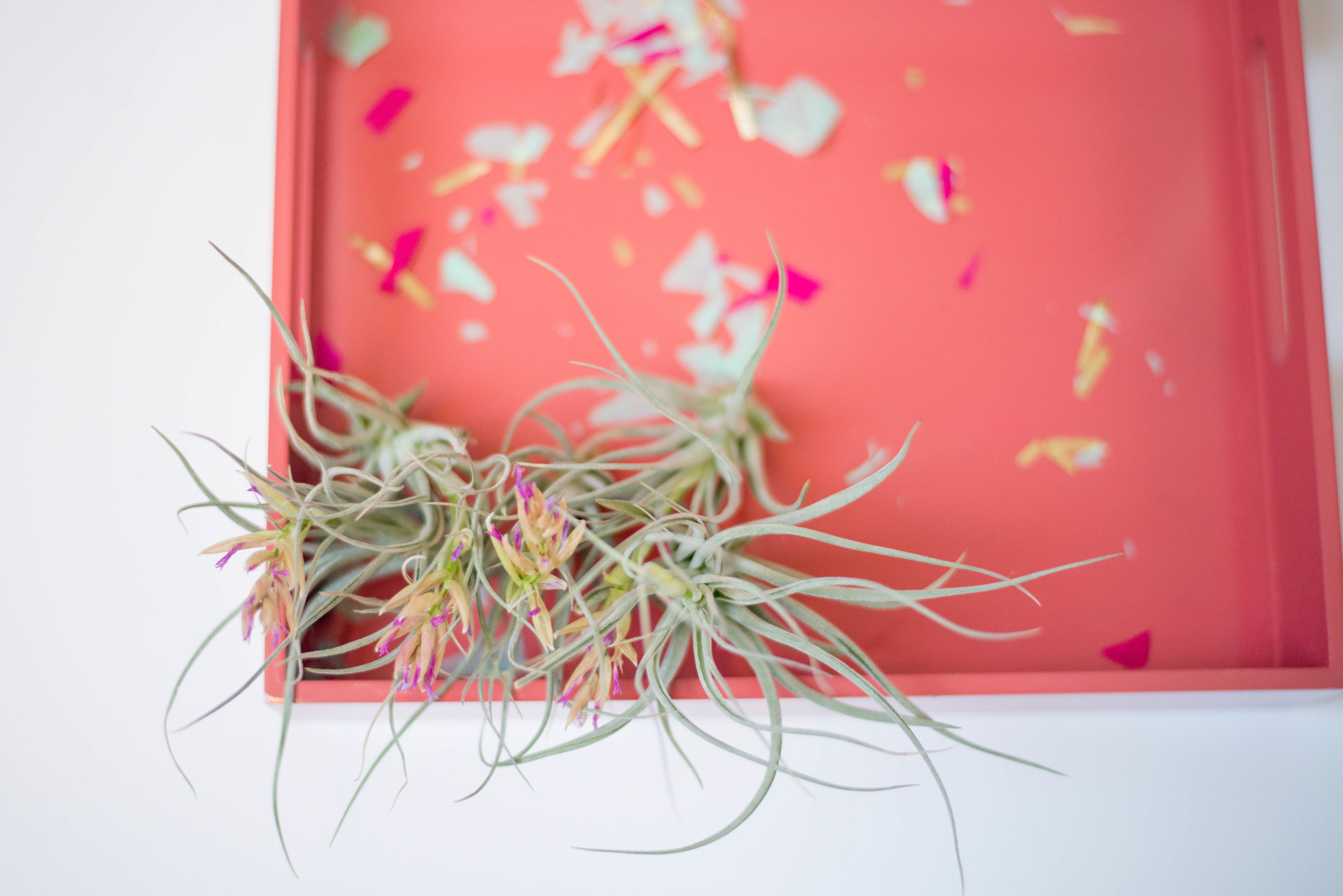 airplant and confetti and tray.jpg