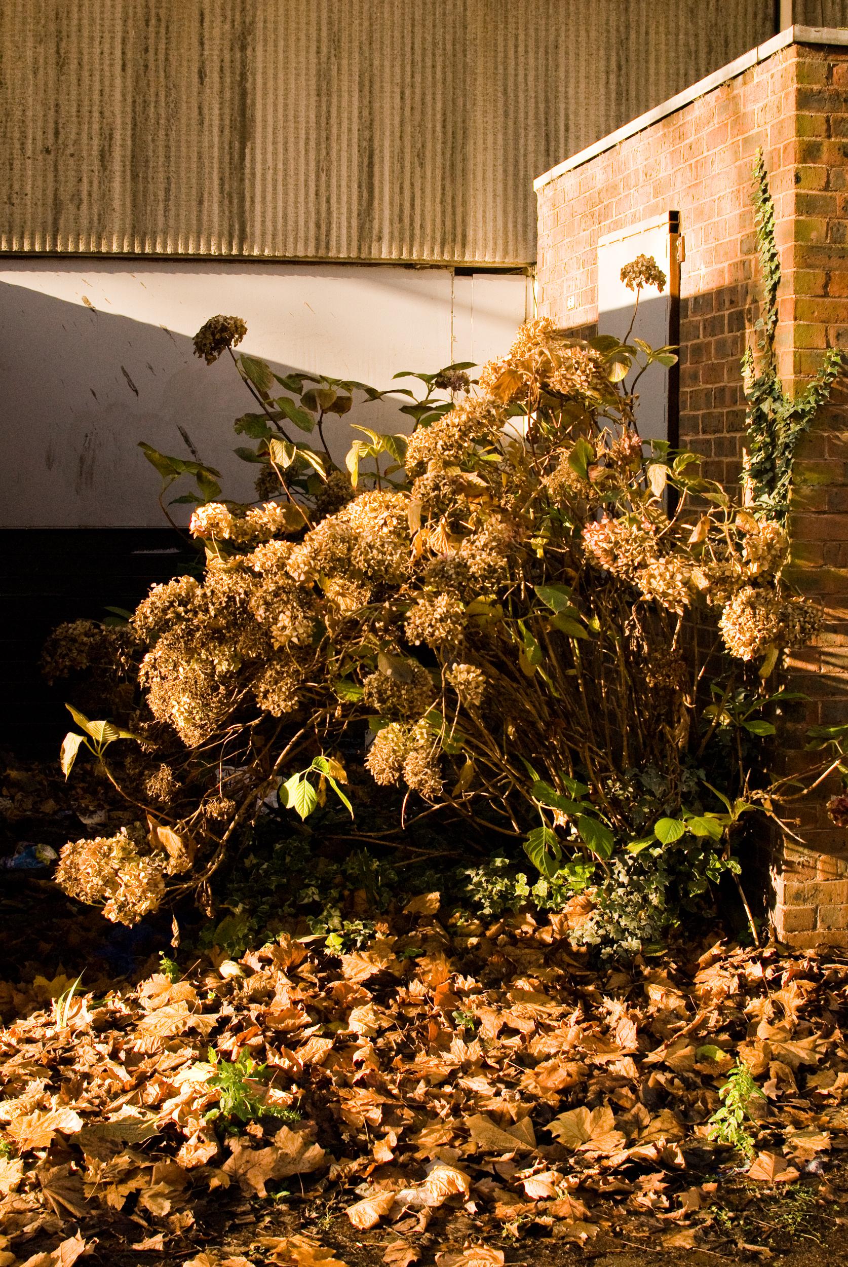 Georgina_cook_Heygate_estate_garden.jpg