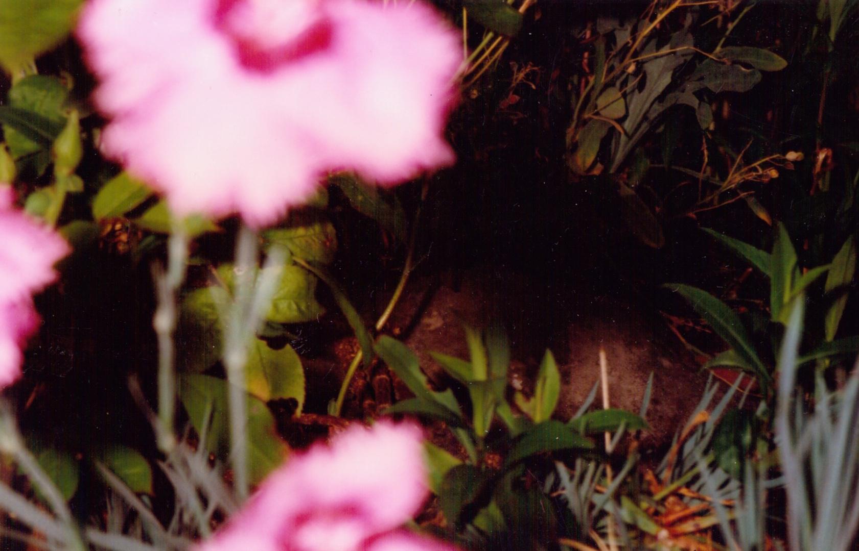 GeorginaCook_memory_scans_flower_photo_film.jpg