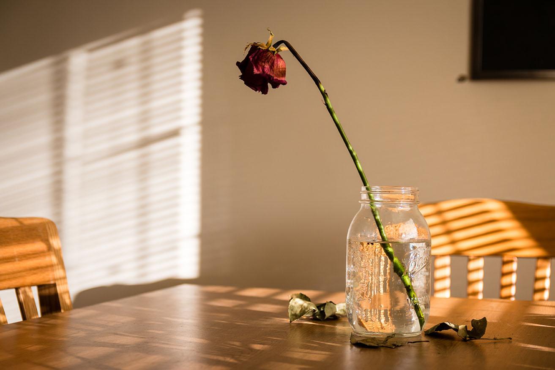 2018.01.26 dead rose-009_small.jpg