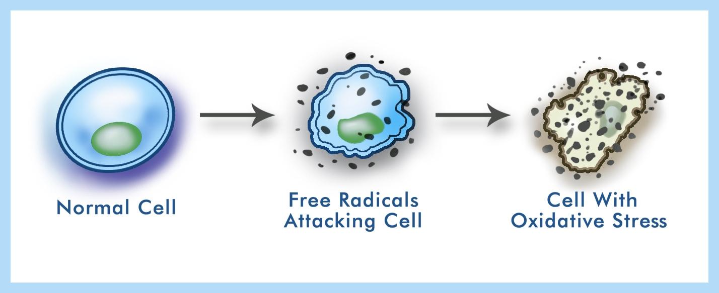 Free-radical-1.jpg