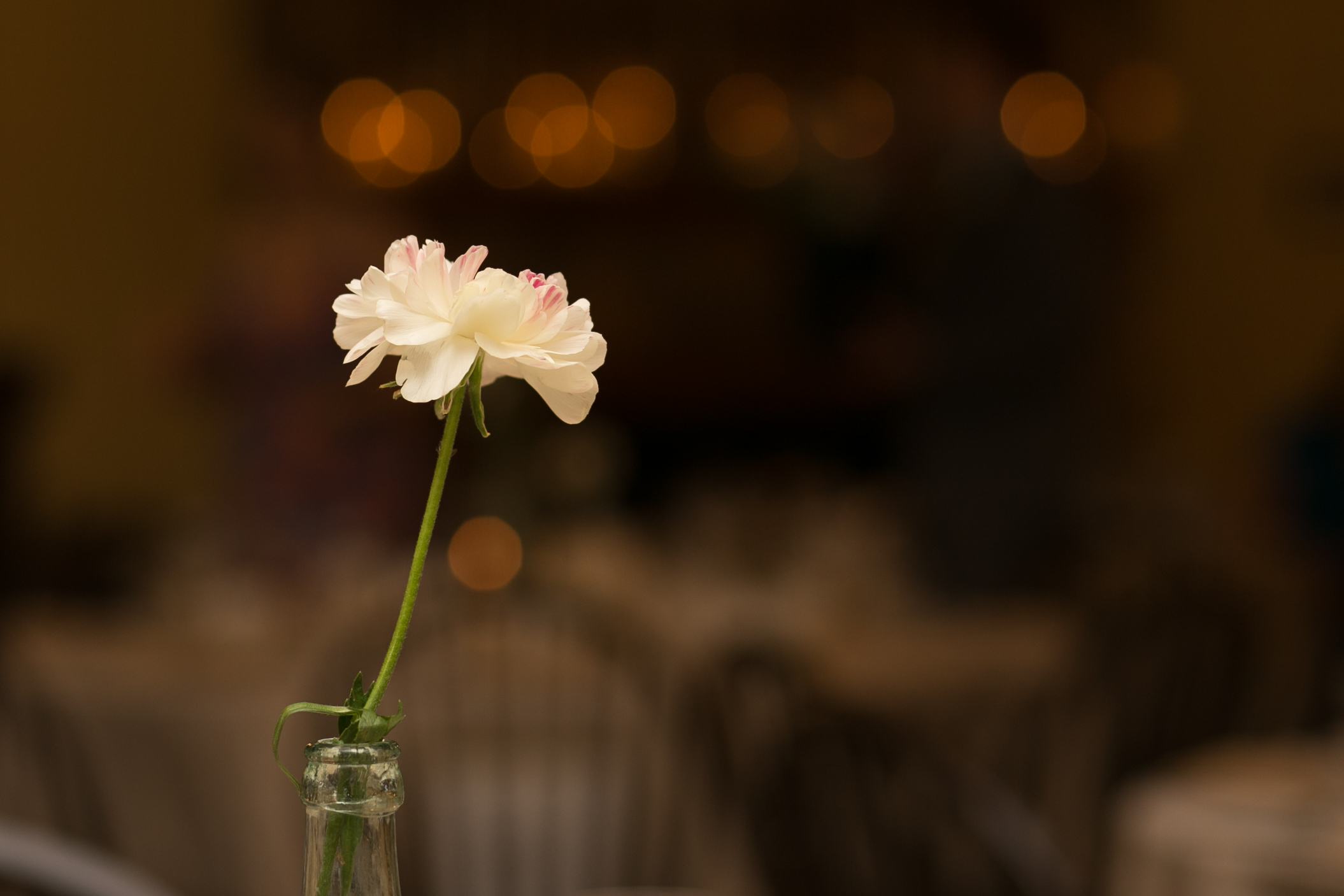 wedding pictures-286.jpg