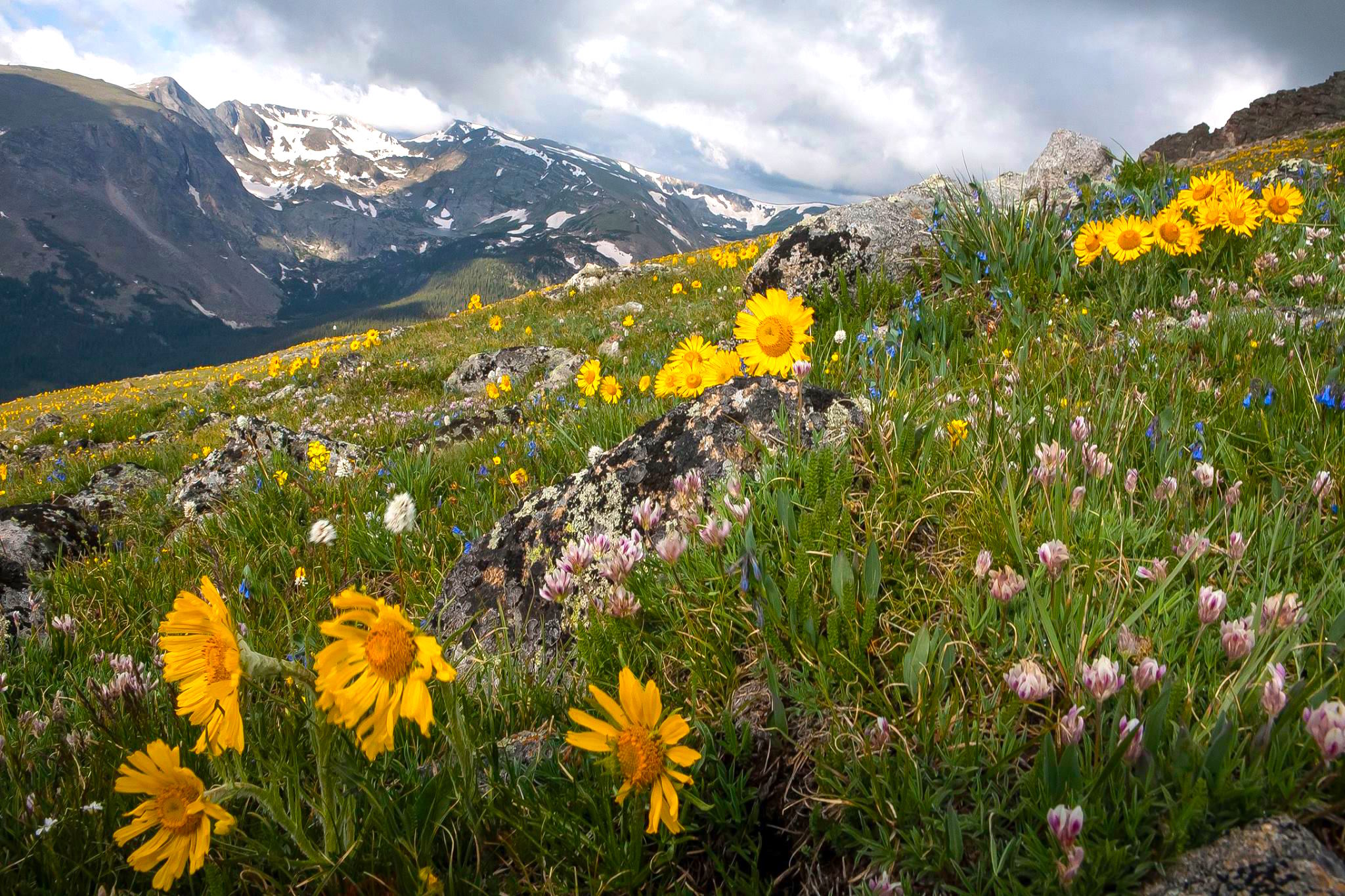 Pretty, right?    Also, you just know this wildflower metaphor is coming back later. Wait for it…