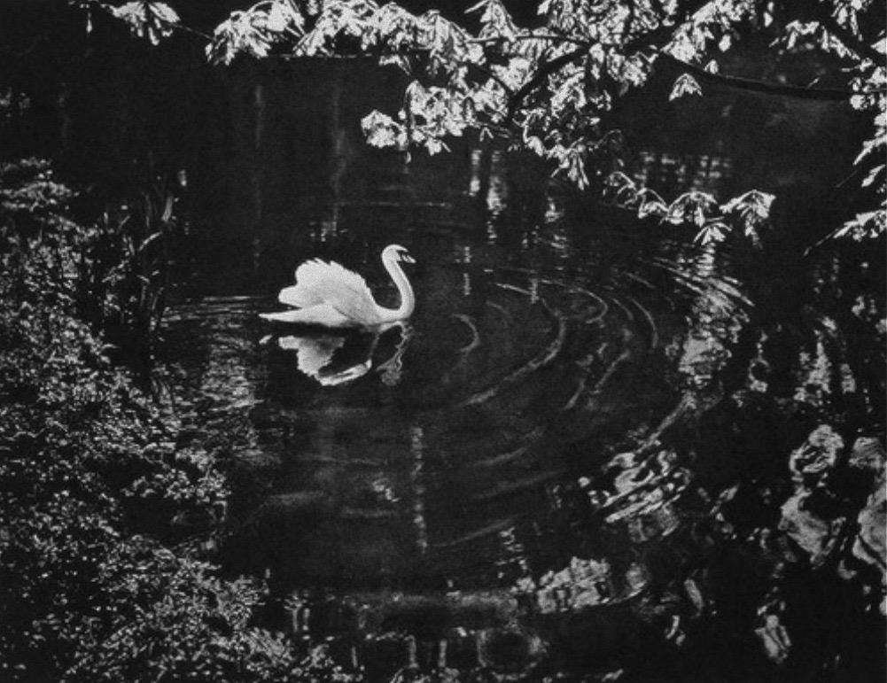 Adolt Fassbender (1884-1980 German) Swan