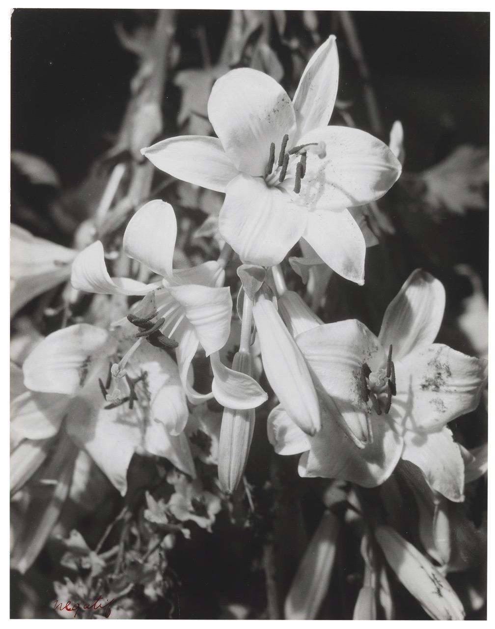 Man Ray, Lilies, 1925 , gelatin silver print