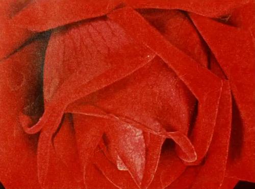 Sedmikrásky (1966), dir. Vera Chytilová