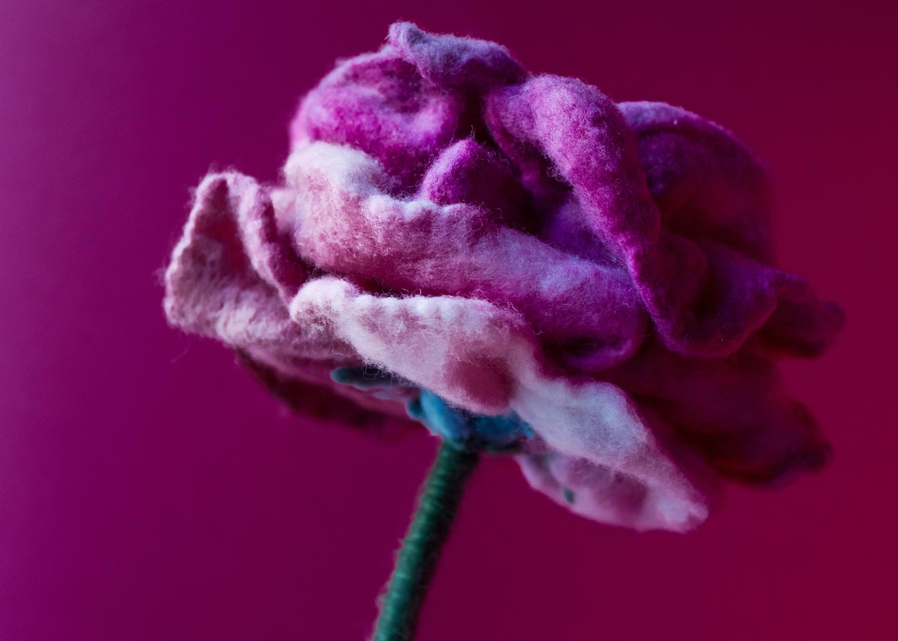 felt-flower-lamp_Wine-Rose_Adelya-Tumasyeva_5.jpg