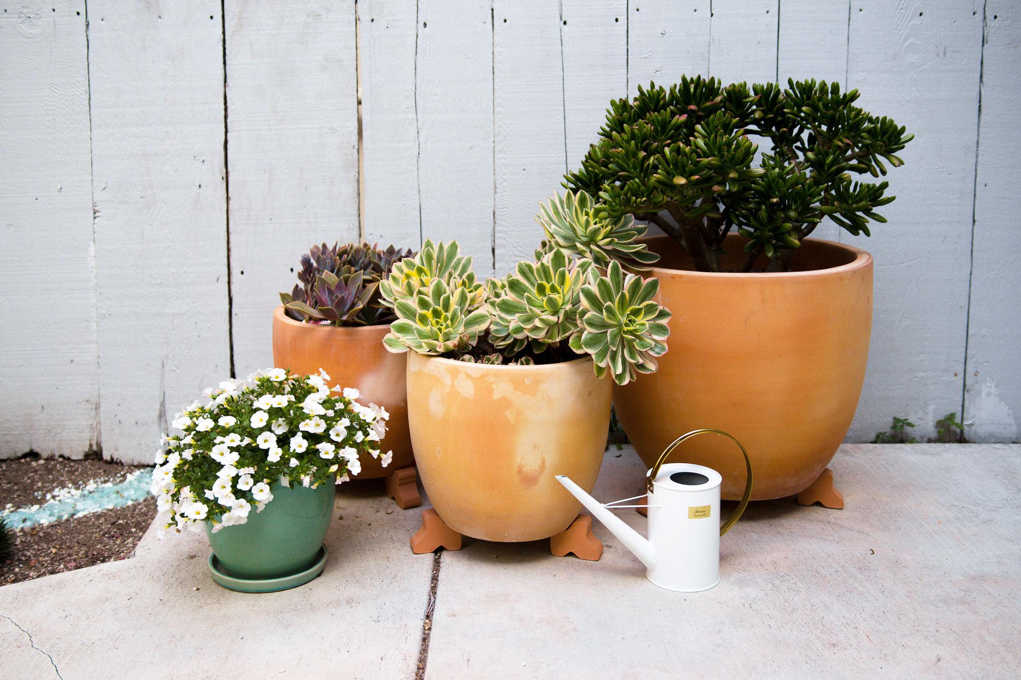 Adelya_Tumasyeva_the-garden-project_28.jpg