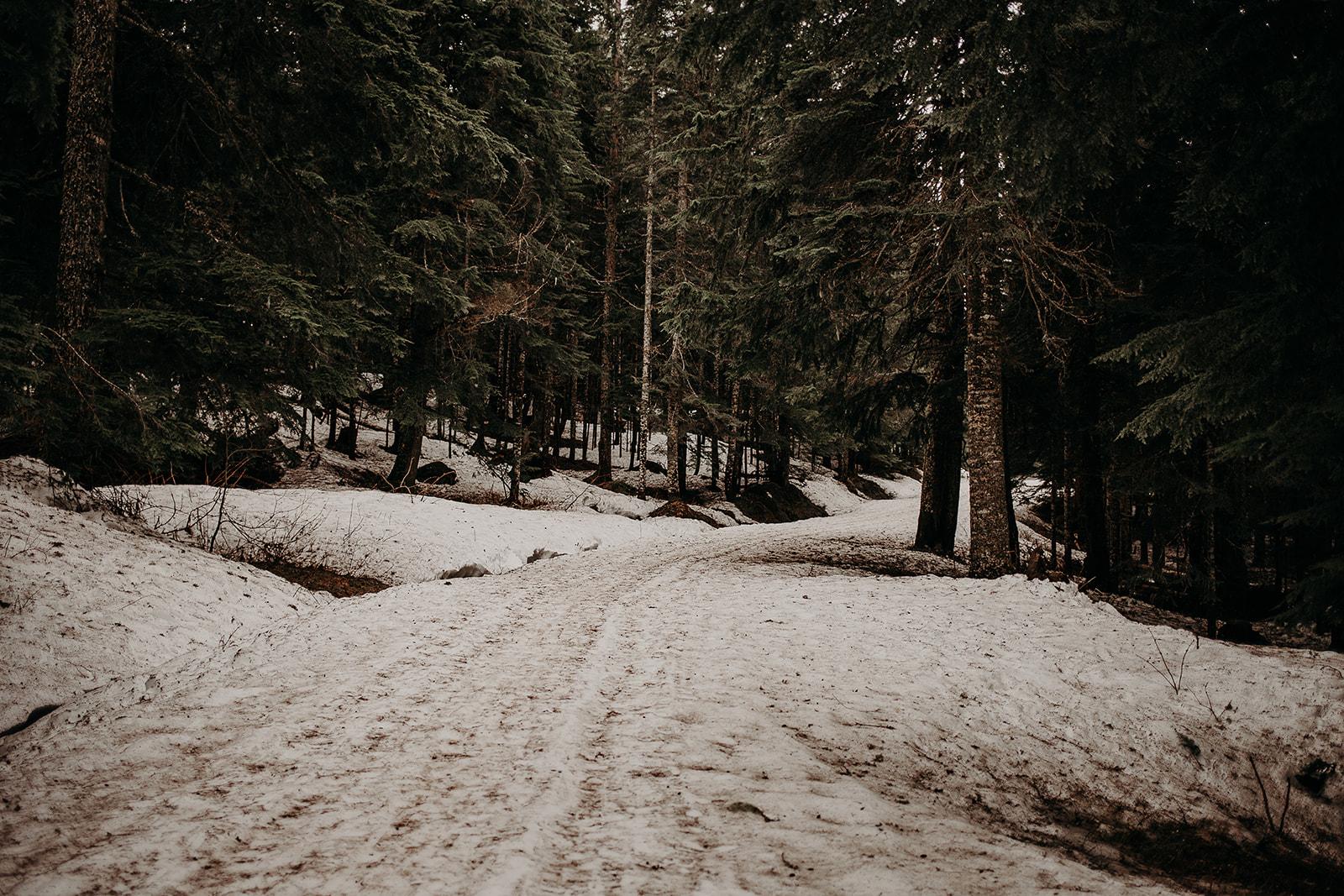 winter-mountain-elopement-asheville-wedding-photographer-megan-gallagher-photographer (57).jpg