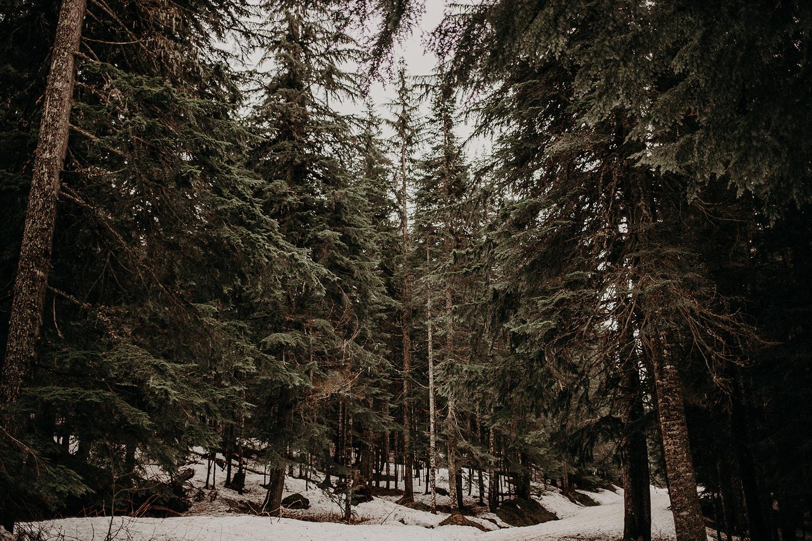 winter-mountain-elopement-asheville-wedding-photographer-megan-gallagher-photographer (58).jpg