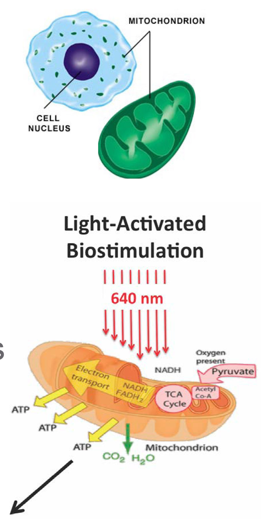 Celluma Biostimulation