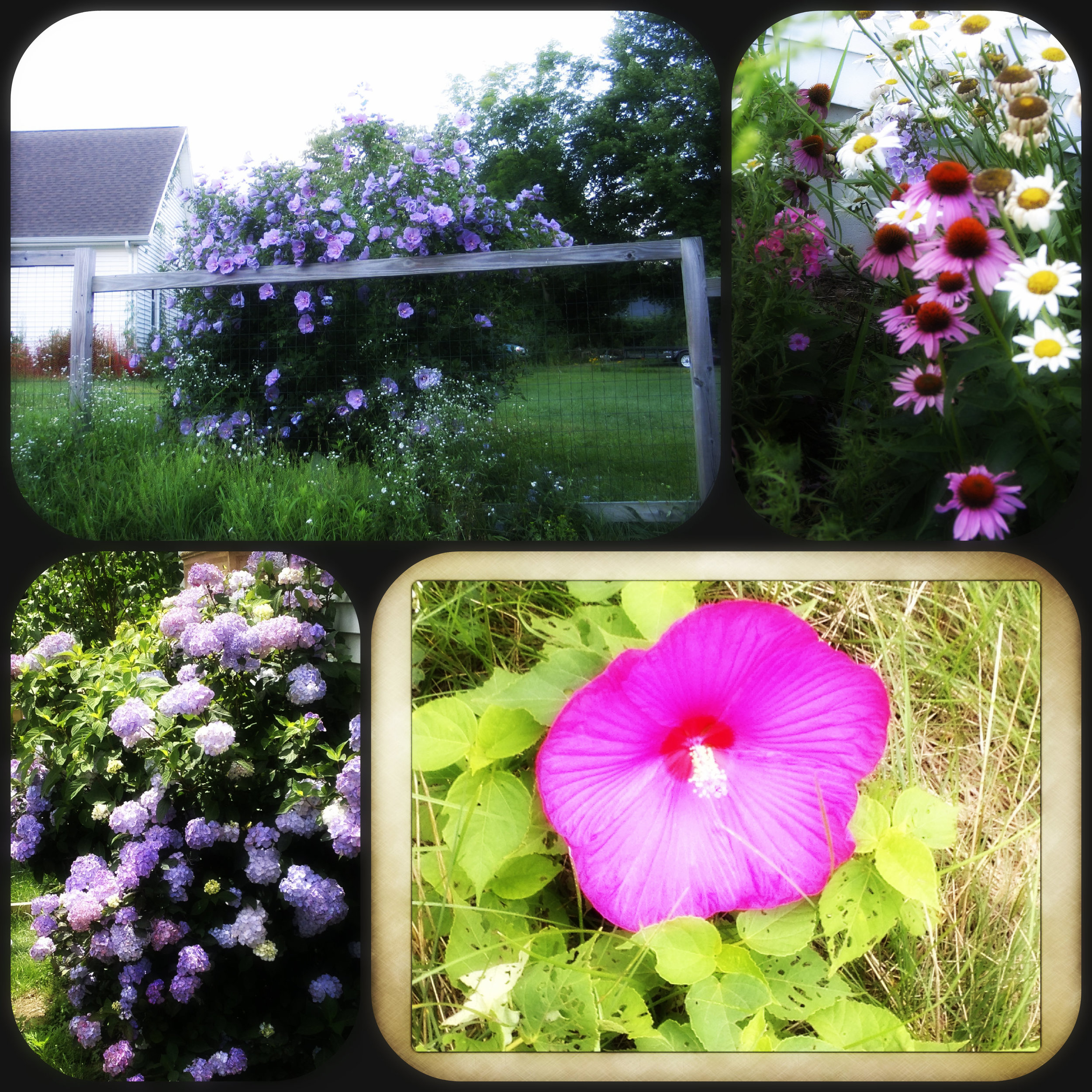 2012-flowers.jpg