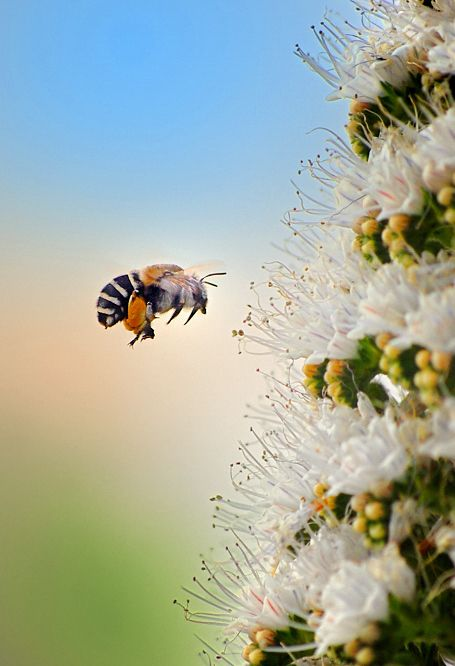 Bee Photo 3.jpg