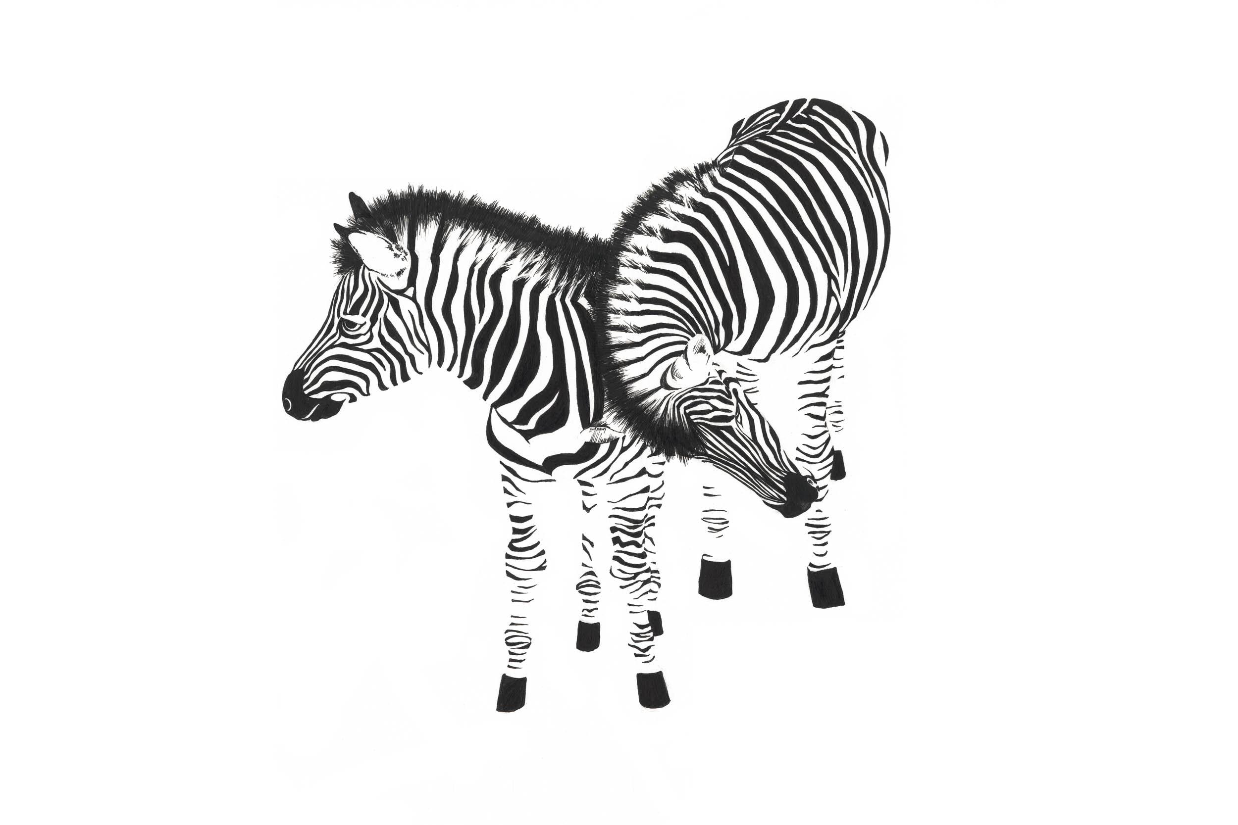 Zebras-web.jpg