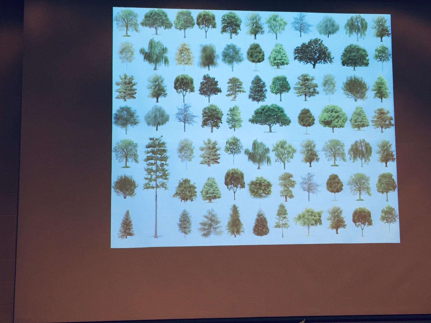 All trees.jpg