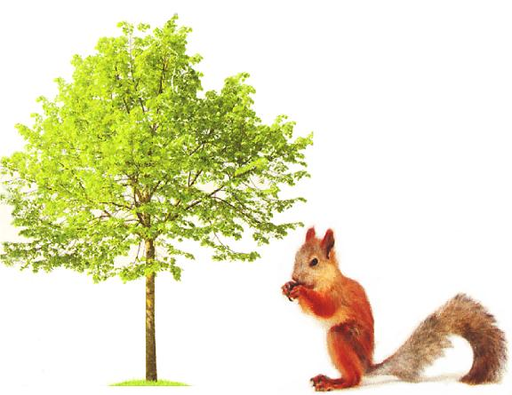 Squirrel Tree Service | www.squirreltreeservices.com