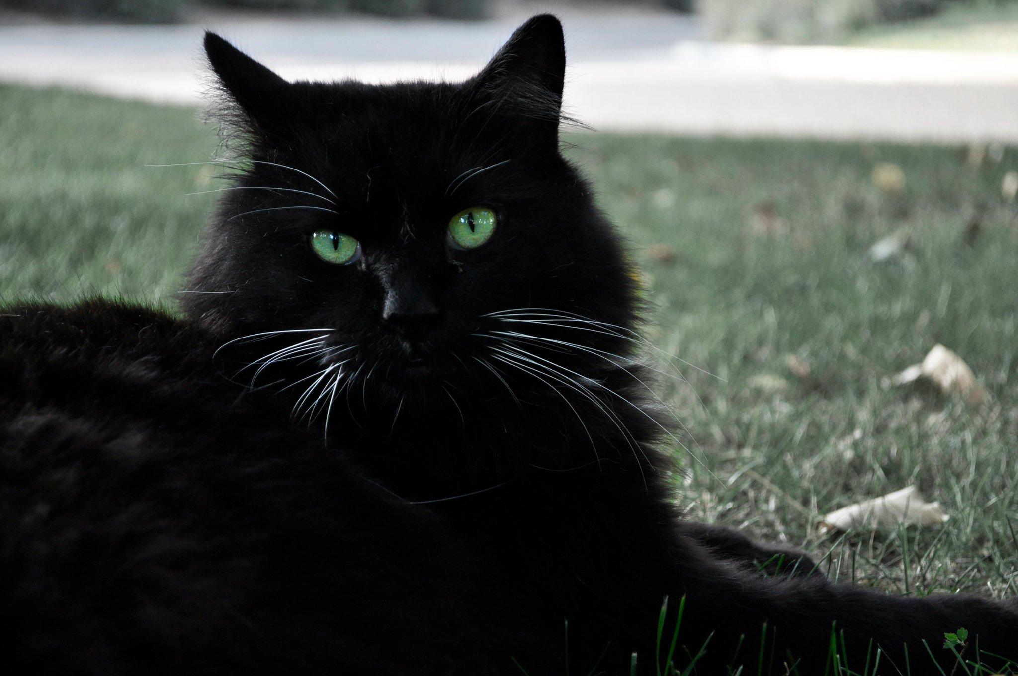 green_eyes_for_black_cats_by_nativekokopelli-d3ezdwx.jpg