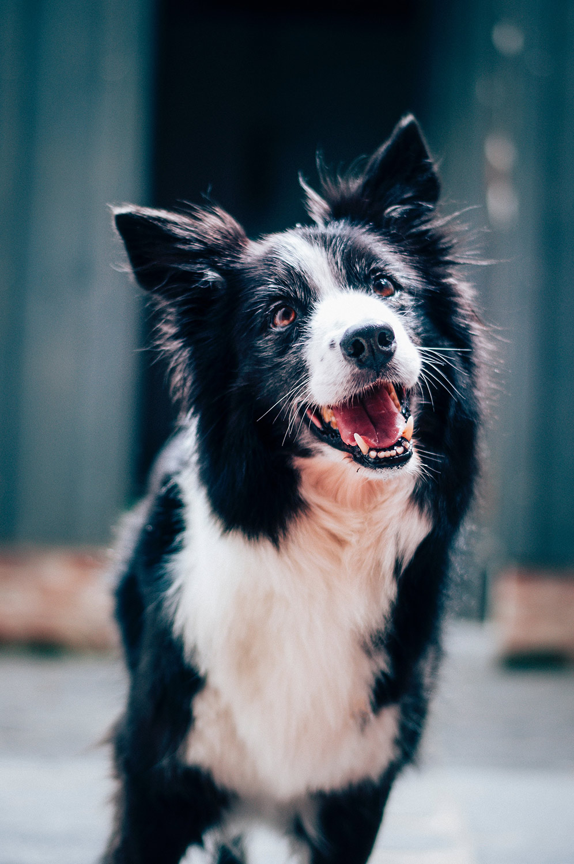 Dog Photography Edinburgh