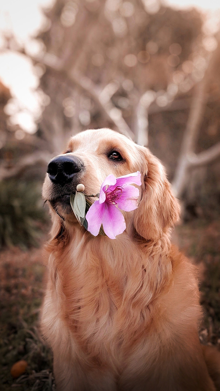 Happy Dog Photography