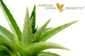 Aloe Vera - As a part of a well-being experience at Keats, we are offering exclusive Aloe Vera products. We have a range of health, nutrition, personal & skincare products from the World Leader in Aloe Vera & Beehive Products. We also have some samples for you to try so you can experience remarkable benefits of Aloe Vera on yourself! If you are interested in some specific product, please let us know and we will make sure to have it for you on your arrival.