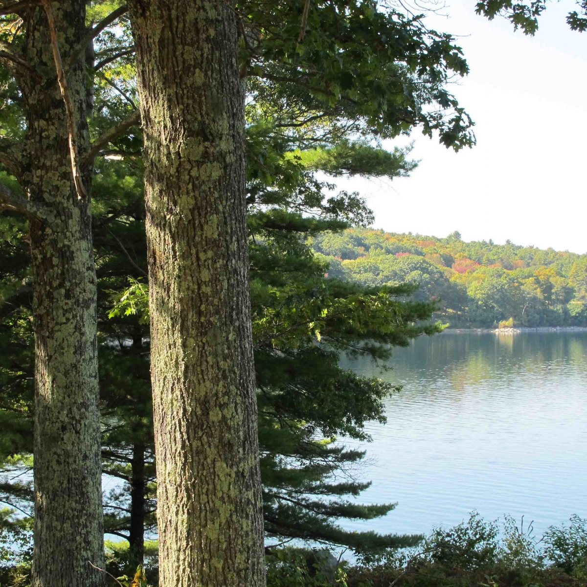 Quabbin & maples mjk 2014med copy.jpg
