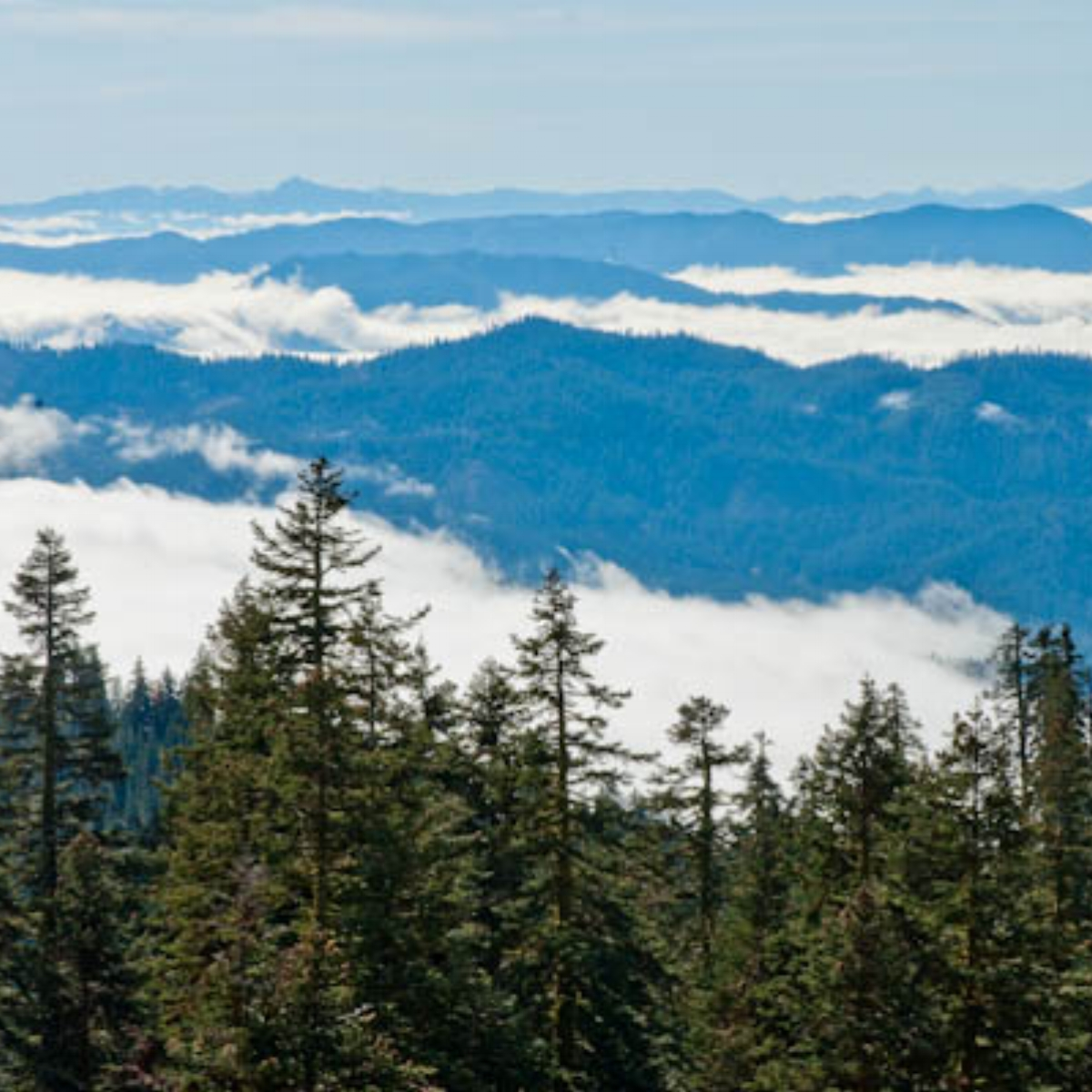 Fog shrouds valley Siskiyou Mts. near Grouse Gap  on the California Oregon border George Wuerthner 6457-2 copy.jpg
