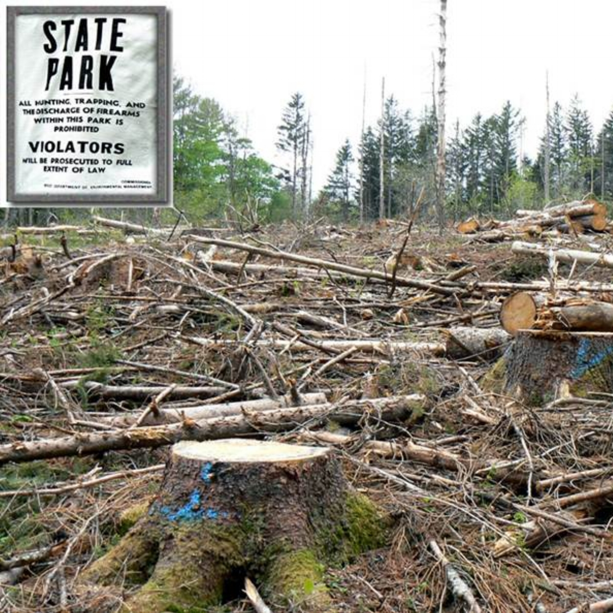 Windsor State Forest clearcut (Matera)