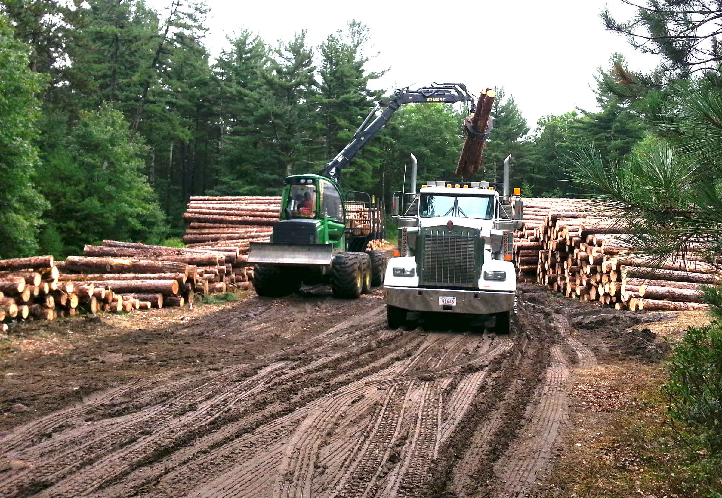Wendell State Forest logging operation, September 2018