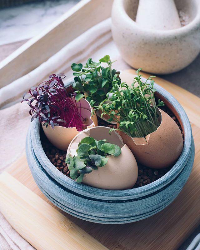 • Tekst o @plantica_mikrobilje vas čeka na blogu 🌿 • . . . #mikrobilje #microplants #microplante #sendvic #sendvici #bufe #bufet #mini #minisendvici #sunka #losos #jaja #paradajz #krastavcu #salata #povrce #zdravo #dorucak #rucak #vecera #uzina #integralnihleb #senf #salmon #ham #recepti #hrana  #foodphotography #recepti #kuvamososmehom