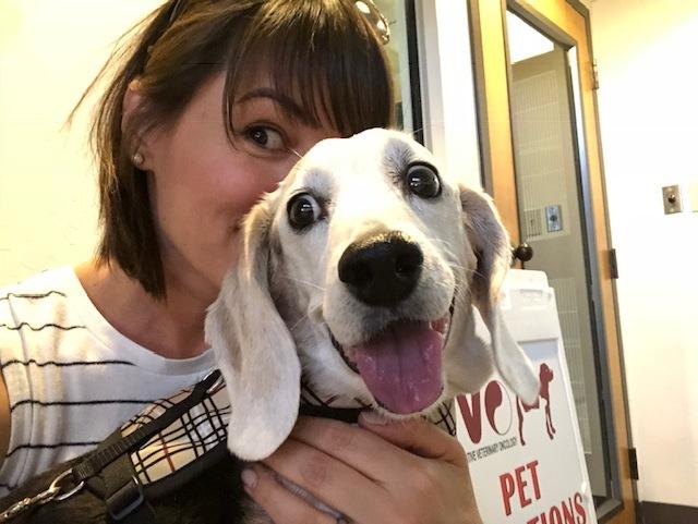 Adorable pet Beagle.