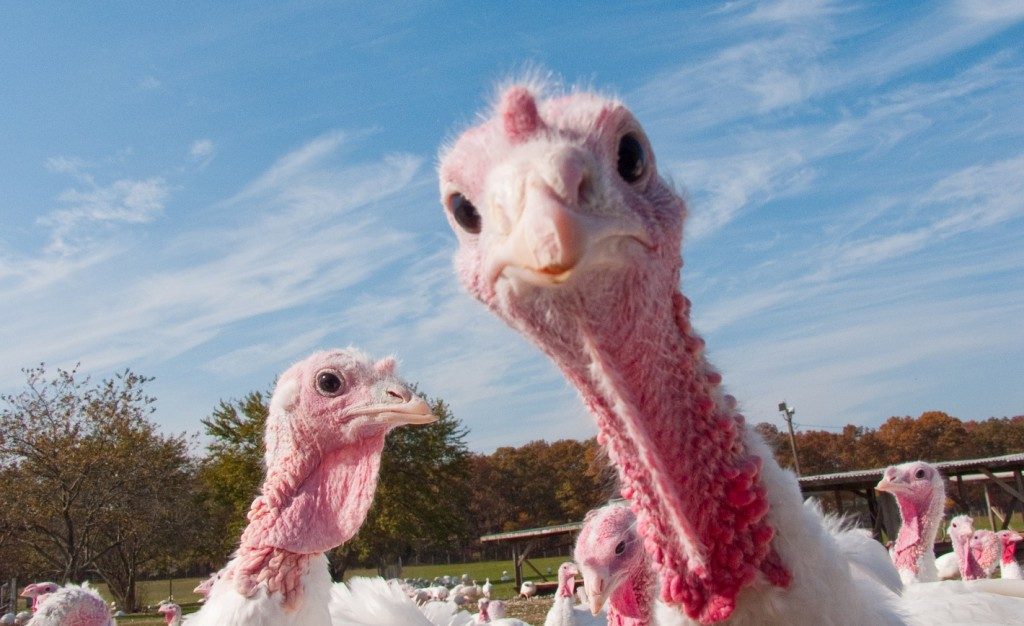 Turkey Day Legal Hazards You'll Want to Dodge - Avvo Stories