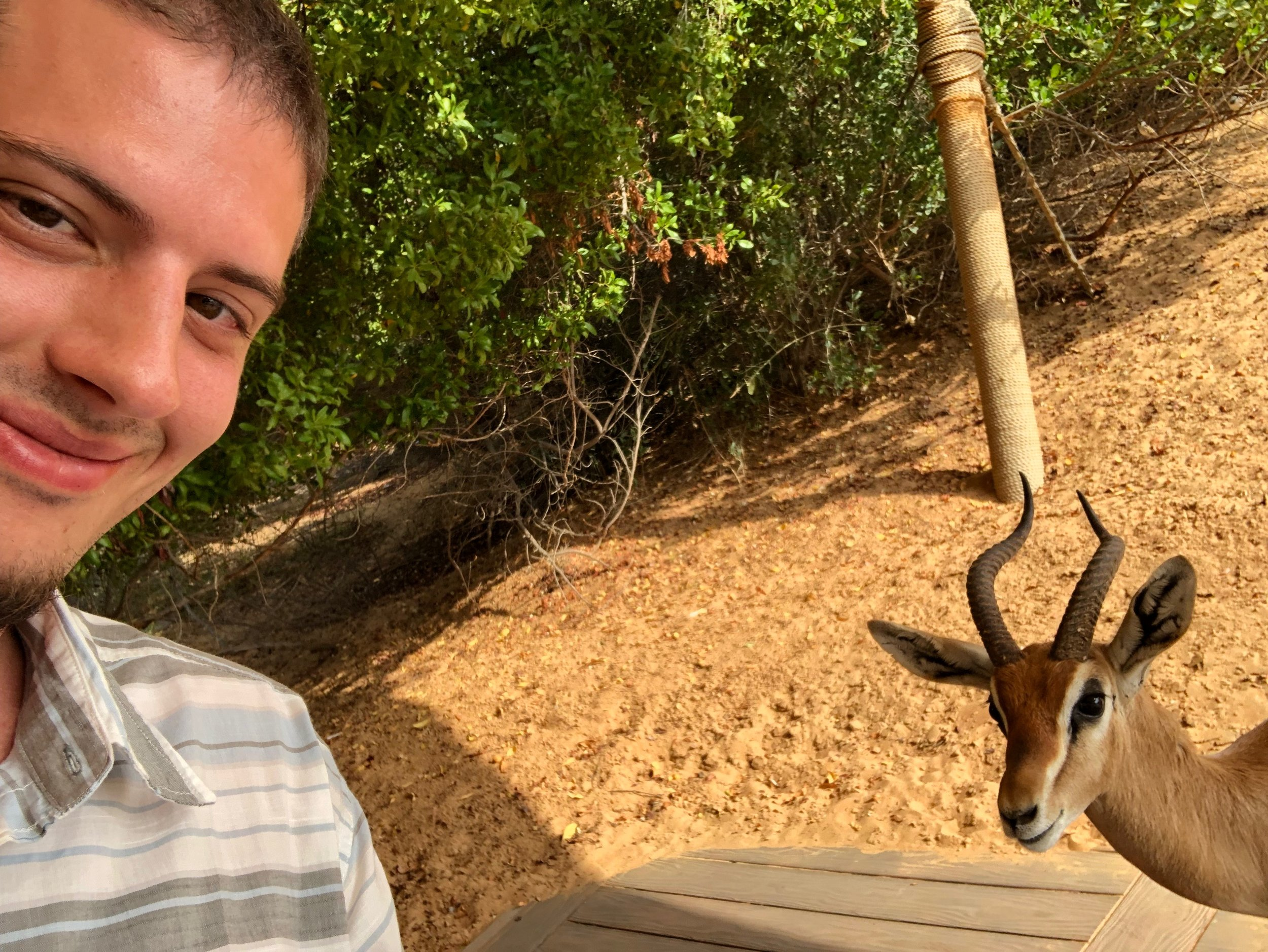 One of the many wild gazelles on the property deciding to take a selfie with me