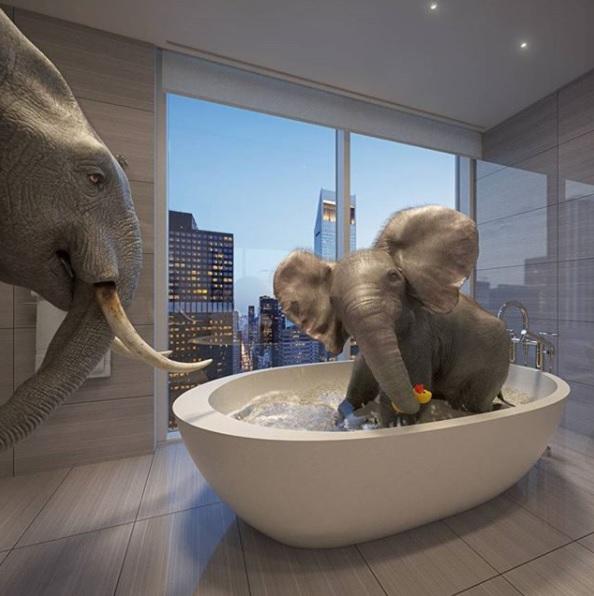 超大浴缸,里面可以坐下一头小象