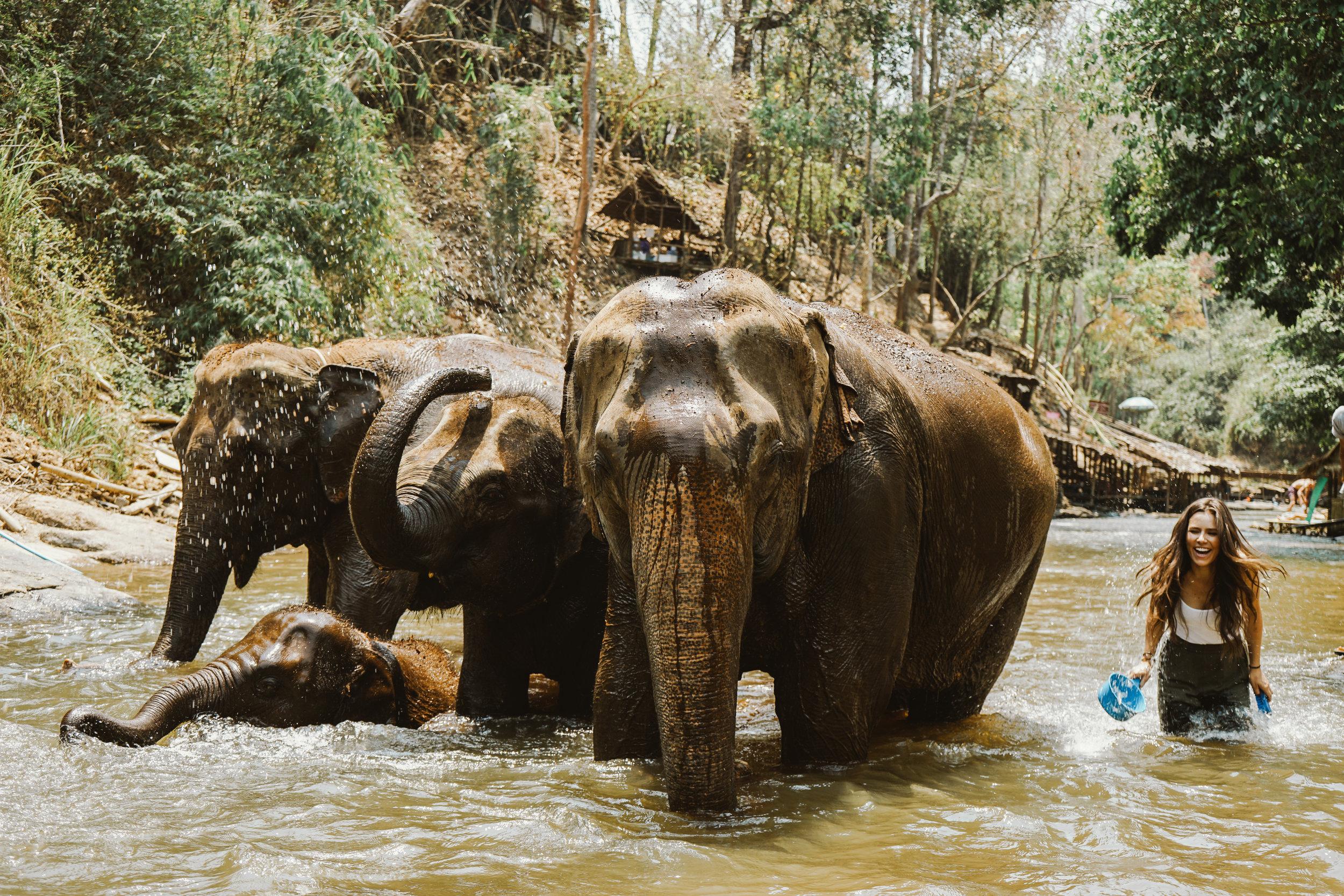 Bath Time with Elephants