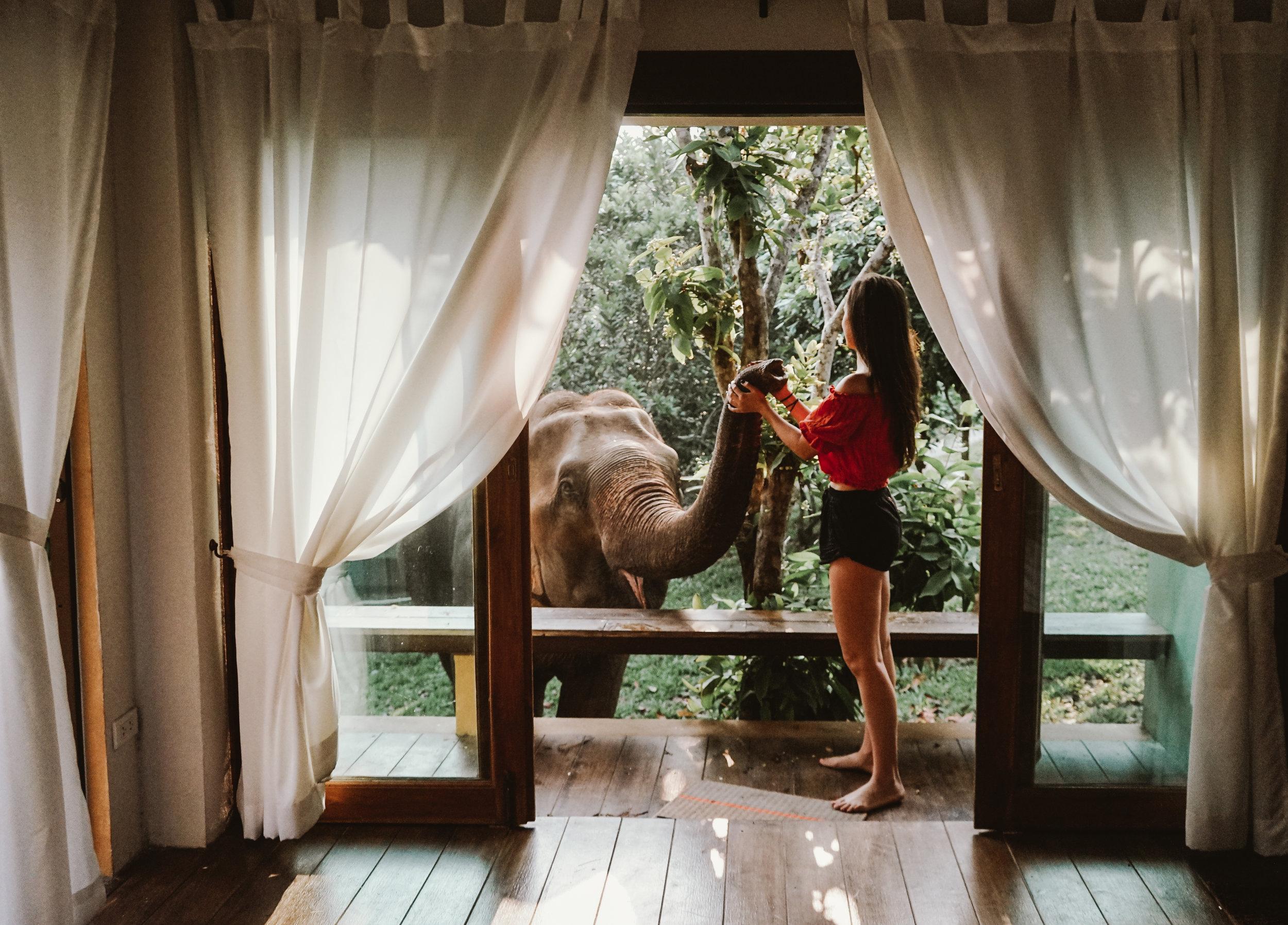 Bungalow Patio with Elephant