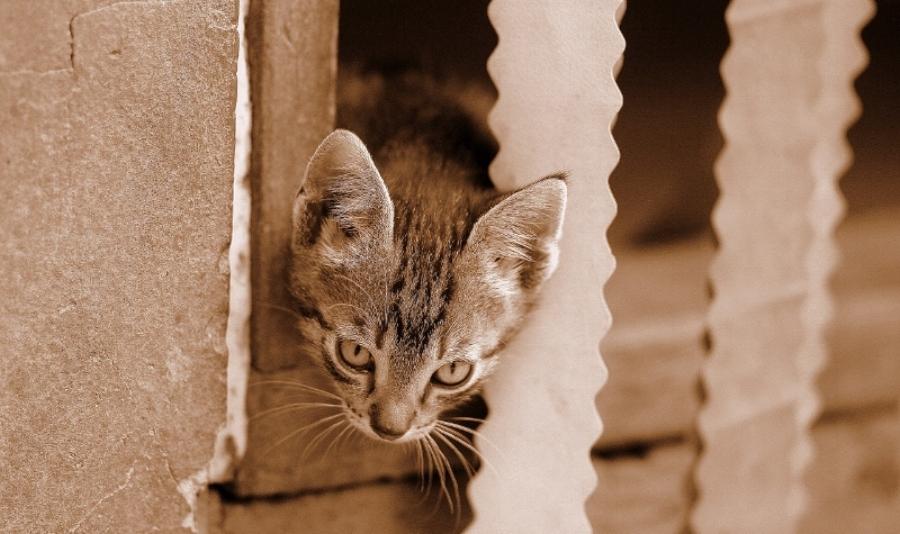 cat-1487815_1280.jpg