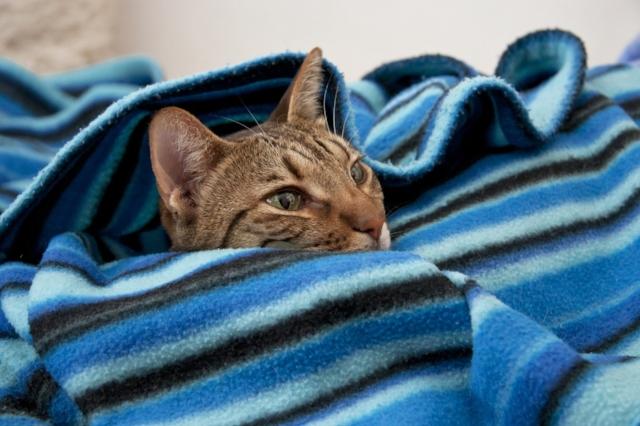 cat-3261093_1280.jpg