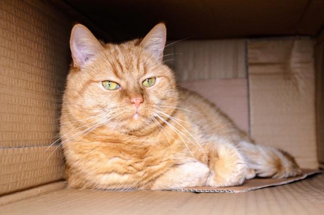 cat-1999679_1280.jpg