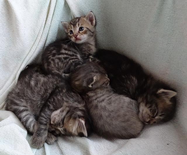 baby-cats-955895_640.jpg