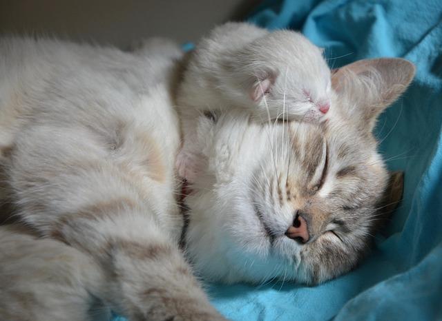 kitten-with-mom-2633283_640.jpg
