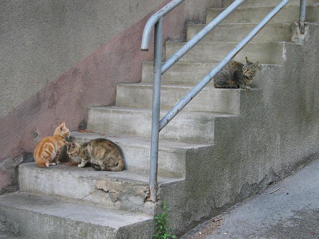 cat-2431606_640.jpg
