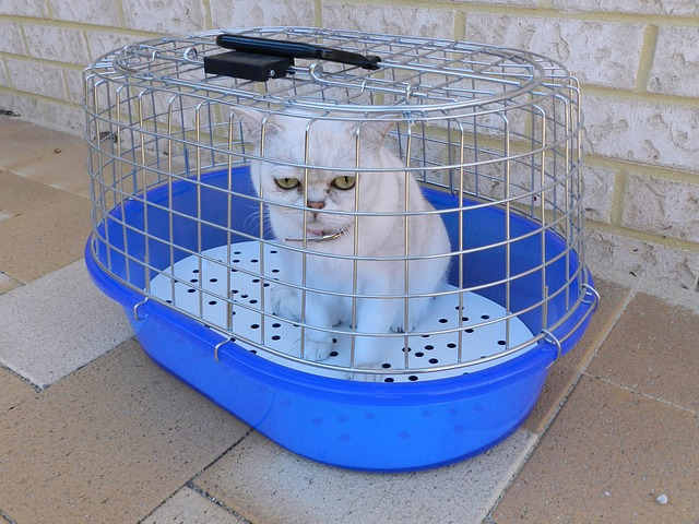 breed-1005404_640.jpg