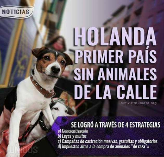 holanda-perro.jpg